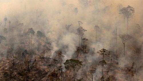 Cambio climático: Se quema el pulmón del planeta